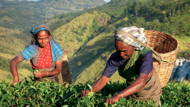 Sri Lanka Reise für junge Leute preiswert traveljunkies