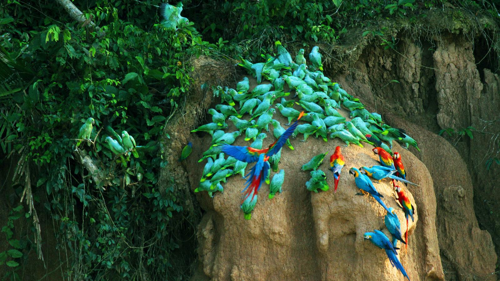 Tambopata Dschungel Erlebnis Reise traveljunkes