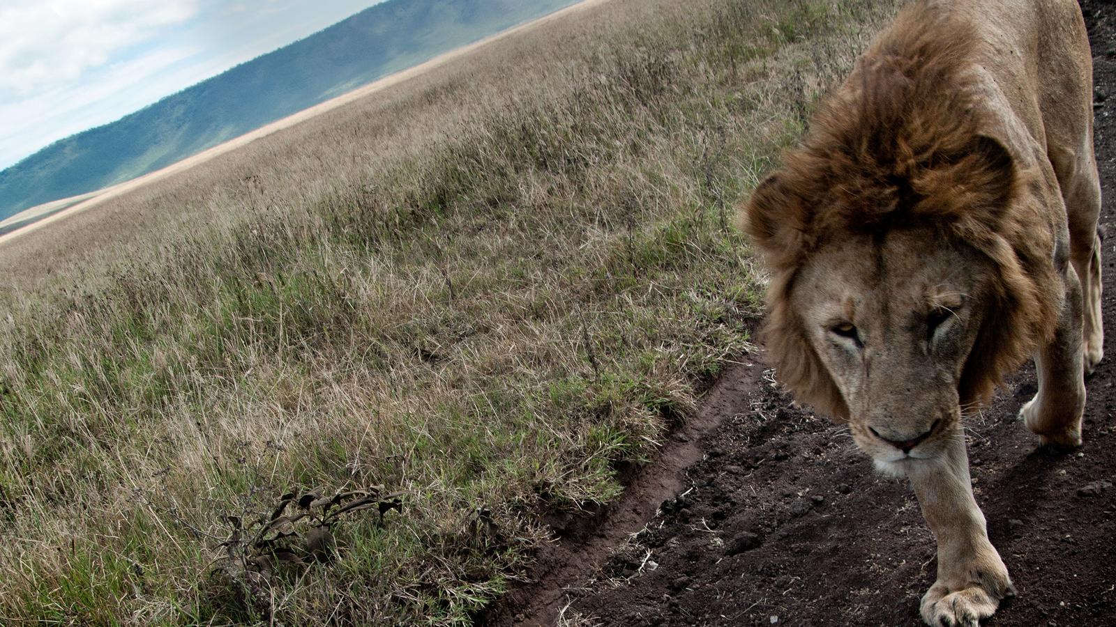 Tansania Heißluftballon traveljunkies Safari Game Drive Gruppenreise Erlebnisreise Afrika Abenteuerreise Great Migration Ngorongoro Krater Serengeti Nationalpark Reisen für junge Leute