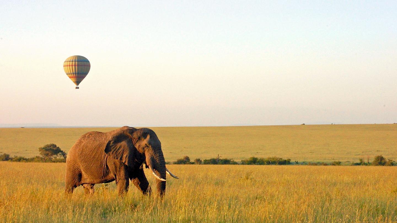 Tansania Lake Manyara Nationalpark Elefant Heißluftballon traveljunkies Kenia Safari Game Drive Gruppenreise Erlebnisreise Afrika Nairobi Abenteuerreise Great Migration Ngorongoro Krater Serengeti