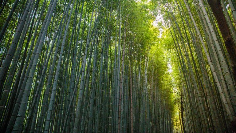 Ultimative Japan Abenteuerreise Gruppenreise traveljunkies