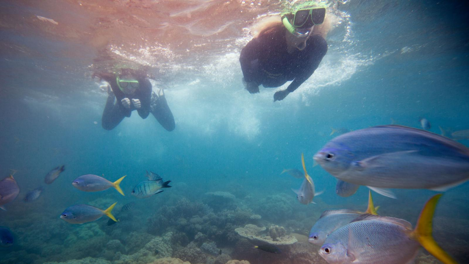 Unterwasserwelt Neuseeland auf der Nordinsel. traveljunkies Reisen für junge Leute