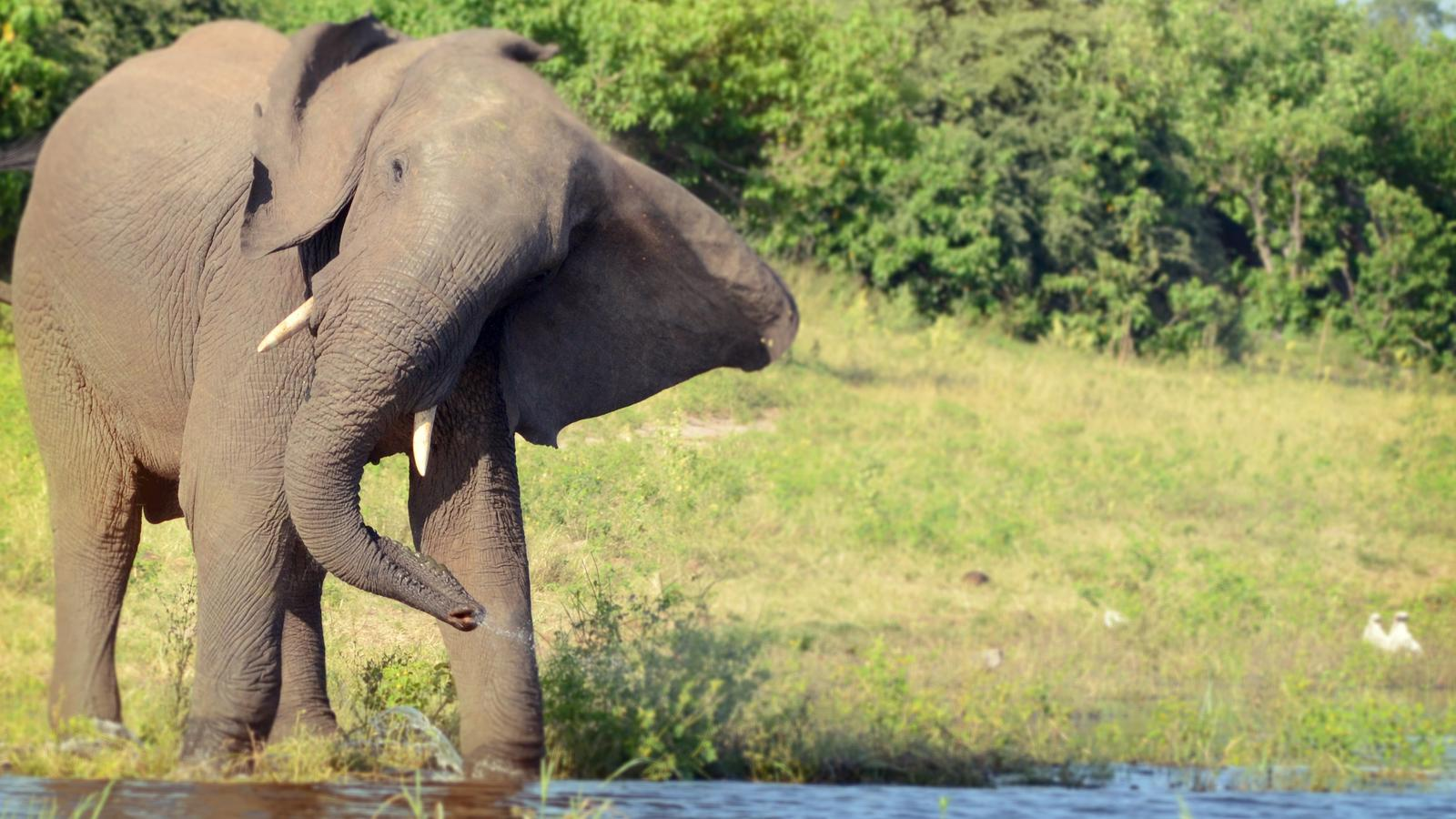 traveljunkies Afrika Südafrika Botswana Simbabwe Reisen für junge Leute Safari Elefant Krüger Nationalpark Okavango Delta Victoriafälle