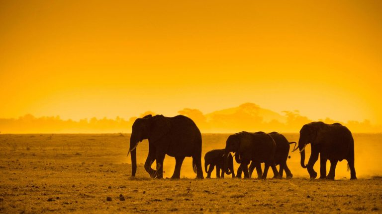 traveljunkies Elefanten im Chobe Nationalpark Namibia Südafrika Simbabwe Botswana Reisen für junge Leute Kapstadt Victoriafälle