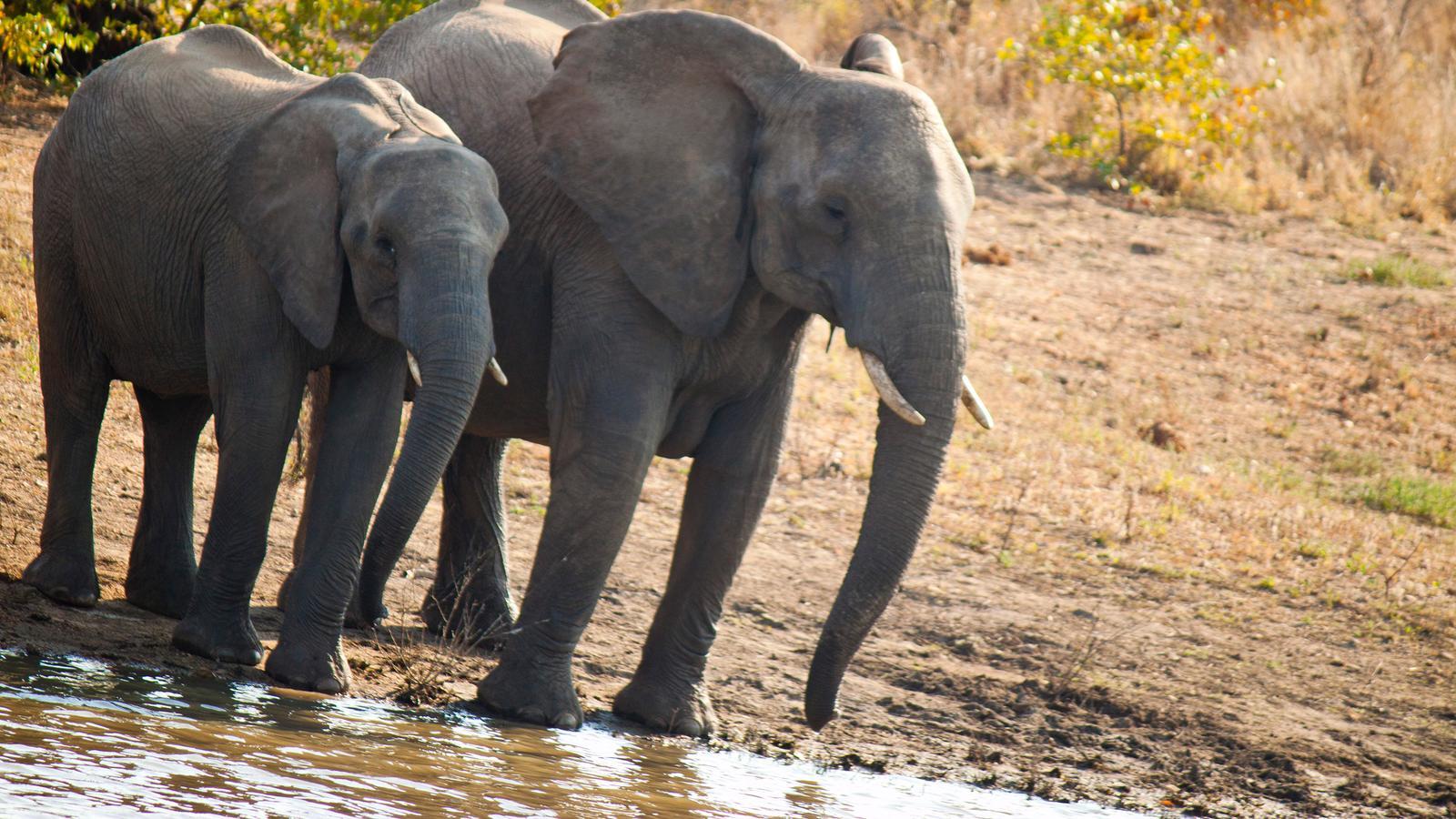 traveljunkies Elefanten im Krüger Nationalpark Namibia Südafrika Safari Kapstadt Johannesburg Abenteuerreise National Geographic Gruppenreise Erlebnisreise Etosha Nationalpark