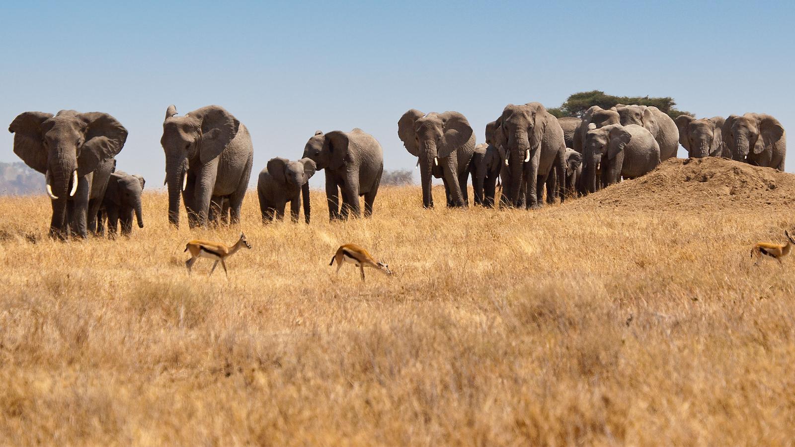 Safari Tours From Cote D Ivoire
