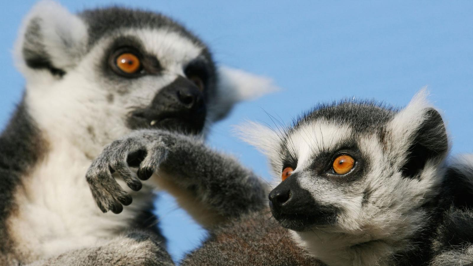 traveljunkies Madagaskar Abenteuerreise Lemuren Rundreise Gruppenreise Erlebnisreise Afrika