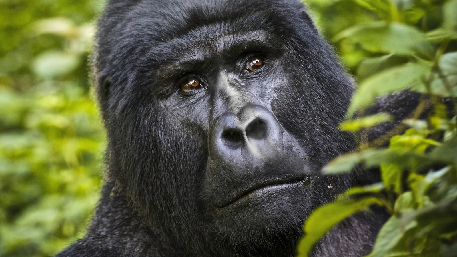 Reisen für junge Leute traveljunkies Uganda Kenia Gorillas Schimpansen Abenteuerreise Erlebnisreise Afrika Safari Adventure Gruppenreise Nairobi Lake Nakuru Lake Bunyonyi Kalinzu Forest